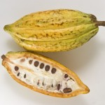 The Cacao Fruit