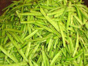 Cluster_bean-guar-Cyamopsis_psoralioides-Cyamopsis_tetragonolobus-TAMIL_NADU74